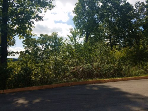 .59 Building Lot In Shiloh Springs : Rutledge : Grainger County : Tennessee