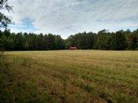 2Bd/1Ba Cabin On 40 Acres : Starkville : Oktibbeha County : Mississippi