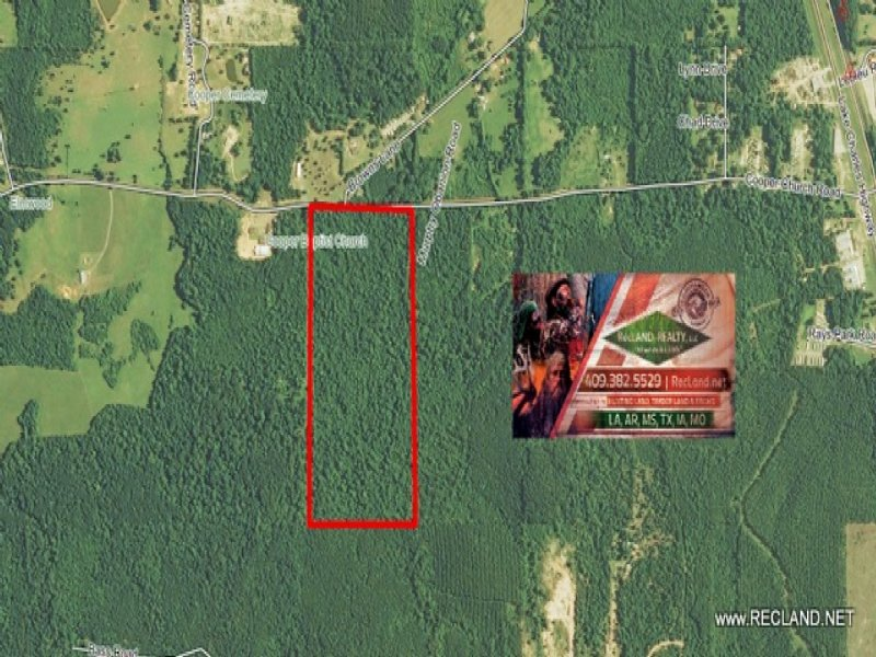 80.00 Acres Hunting Land, Timber : Leesville : Vernon Parish : Louisiana