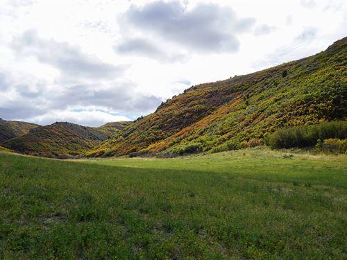Christmas Tree Ranch : Craig : Moffat County : Colorado