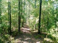 Reduced Rocky Creek Road : Forsyth : Monroe County : Georgia