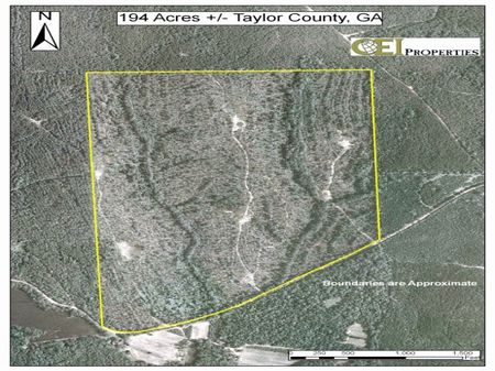199 Acres Of  Timber And Hunting : Rupert : Taylor County : Georgia