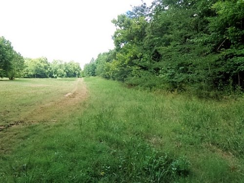9.9 Acres - Wooded, Unrestricted : Olivehill : Hardin County : Tennessee