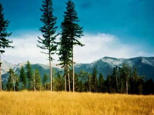 Majestic View Family Estate/Ranch : Seeley Lake : Missoula County : Montana