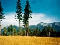 Majestic View Family Estate/Ranch : Seeley Lake : Missoula County : Montana