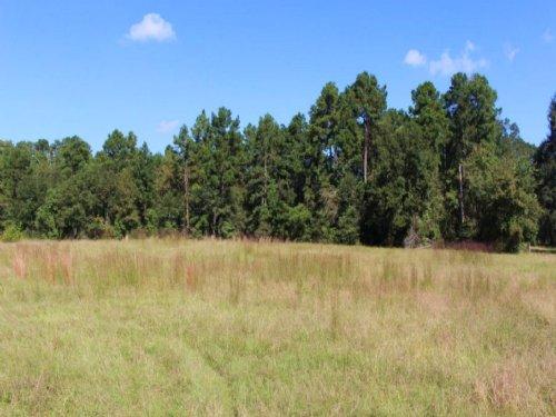 Blaydes 15 : Richards : Montgomery County : Texas