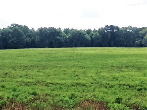 105 Acres With 37 Acre Field : Banks : Pike County : Alabama