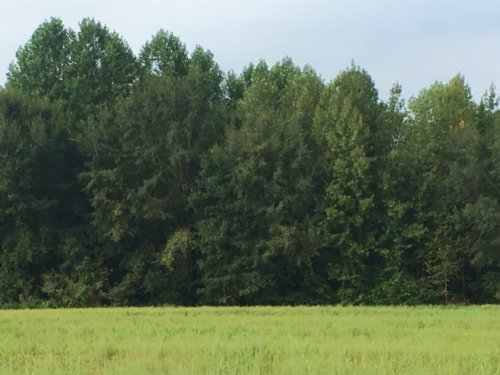 88 Acres With An 11 Acre Field. : Banks : Pike County : Alabama