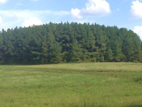 50 Acres Half Open, Half Wooded : Banks : Pike County : Alabama