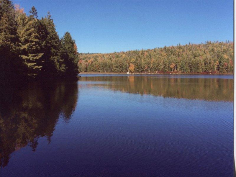 Dutton Pond Forest : Amherst : Hancock County : Maine