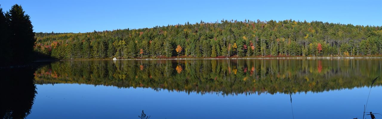 Dutton Pond Forest
