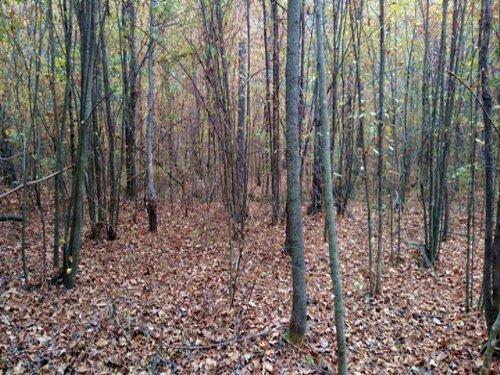 3.78 Acres : Sturgis : Oktibbeha County : Mississippi