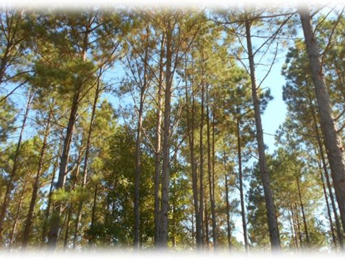 484 Acres In Madison County : Camden : Madison County : Mississippi