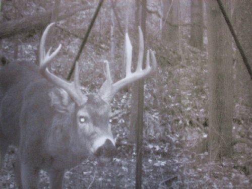 Bishopville Rd - 7 Acres : Glouster : Morgan County : Ohio