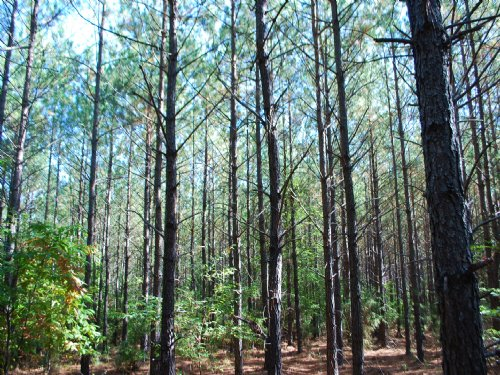 61 Ac Timberland / Recreation Tract : Union : South Carolina