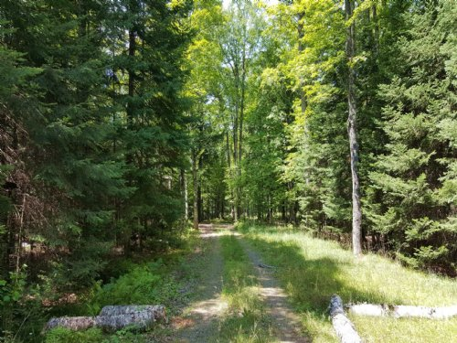 81.31 Acres W/unlimited Potential : Land O Lakes : Vilas County : Wisconsin
