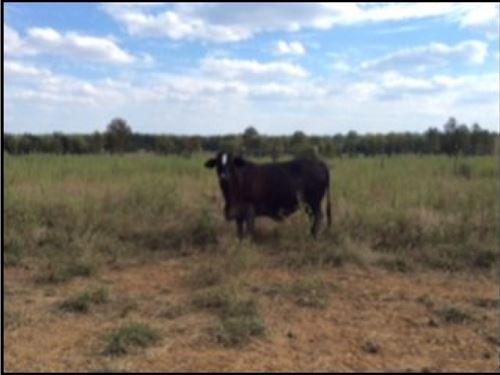 1074 Acres In Noxubee County : Brooksville : Noxubee County : Mississippi