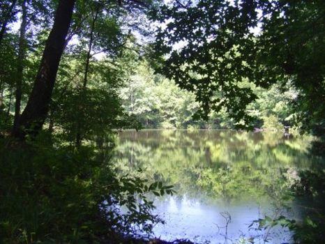 768 Acres Ready to Hunt : Hawkinsville : Pulaski County : Georgia
