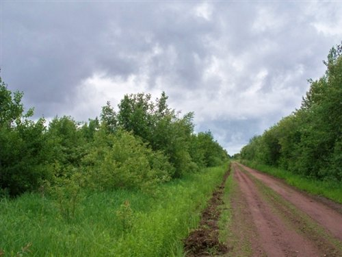 20 Acres. Terms $150/month : Waskish : Koochiching County : Minnesota
