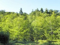 Woodbury Hill Forest : Sewden : Oxford County : Maine