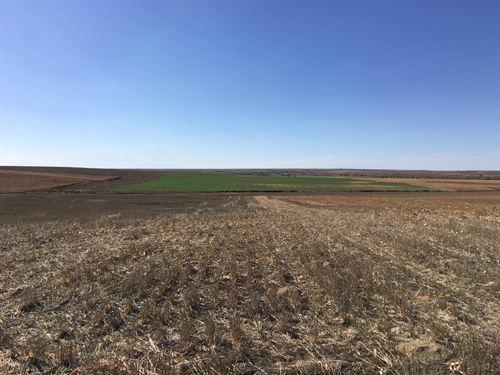 Kansas Nebraska Farm & Ranch : Bird City : Cheyenne County : Kansas