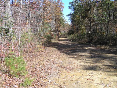 14 Wooded Acres, No Restrictions : Altamont : Grundy County : Tennessee