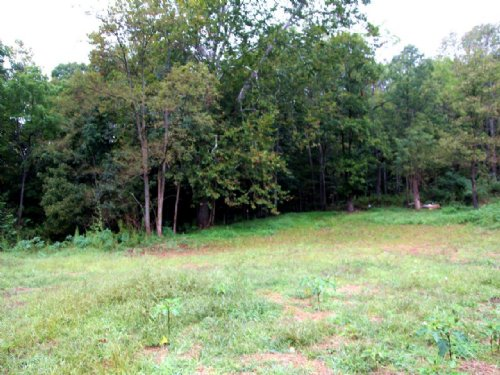 For Sale: 168± Acres Of Timberland : Roanoke County : Virginia