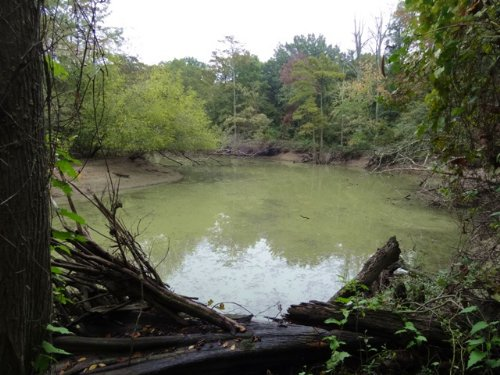 40 Acres Bordering Cache River Nwr : Tupelo : Jackson County : Arkansas