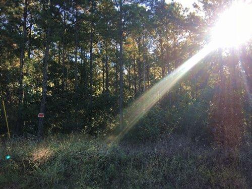 22 Acres Lone Oak Drive : Oakhurst : San Jacinto County : Texas