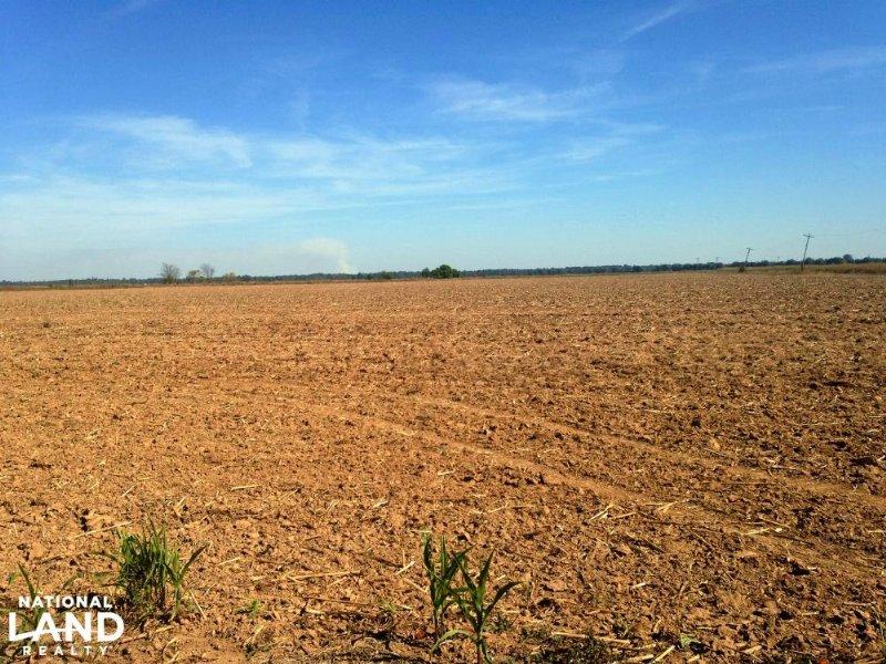 200 Acre Farmland, Deer, Duck Hunti : Empire : Chicot County : Arkansas