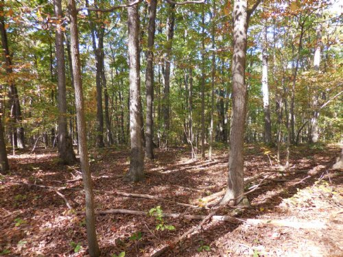 68 Wooded Acres : Winchester : Frederick County : Virginia