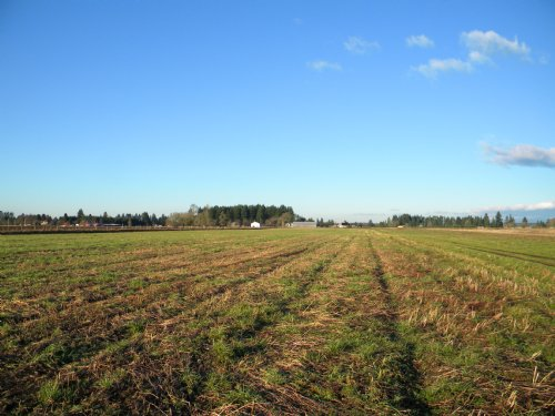 217 Acres Level Farmland : Toledo : Lewis County : Washington