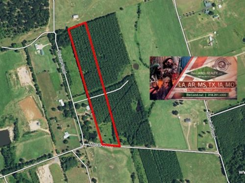 11.3 Ac - Timberland Tract With Hom : Elysian Fields : Harrison County : Texas