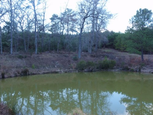 Orange Box Ranch : Grapeland : Houston County : Texas