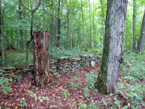 81 Acres Hunting And Timberland : Marathon : Cortland County : New York