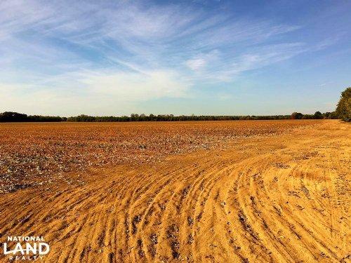 Dry Creek Cropland : Uniontown : Marengo County : Alabama