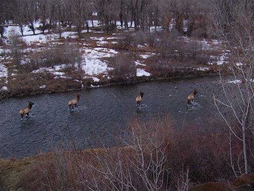 River Ranch Home : Montrose : Colorado