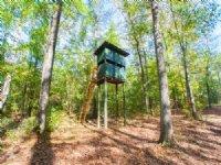 442+/- Ac  Pine Plantation : Waverly : Chambers County : Alabama