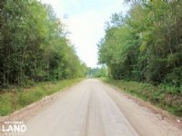 Branchville Timber Investment : Branchville : Orangeburg County : South Carolina