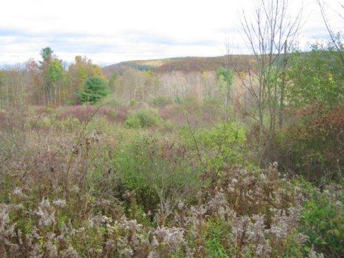 10 Acre Building Lot Near Ithaca : Caroline : Tompkins County : New York