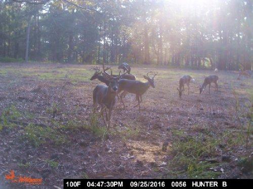 77+/- Acre Deer Farm : Franklinton : Washington Parish : Louisiana
