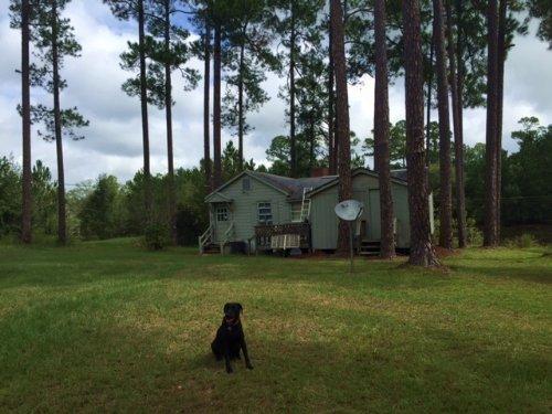Cabin Pond Hunting : Rochelle : Wilcox County : Georgia