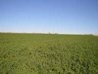 385.46 Acre Irrigated Farm : Lamar : Prowers County : Colorado