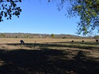 145 Acres +/- Riverfront Property : Williford : Sharp County : Arkansas