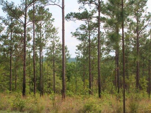 Fuqua Forest : Bainbridge : Decatur County : Georgia