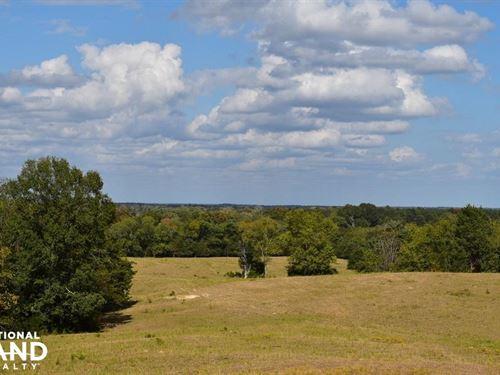Jones Creek Cattle Farm : Livingston : Sumter County : Alabama