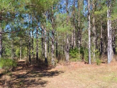 Pines & Hardwoods : Midland City : Dale County : Alabama