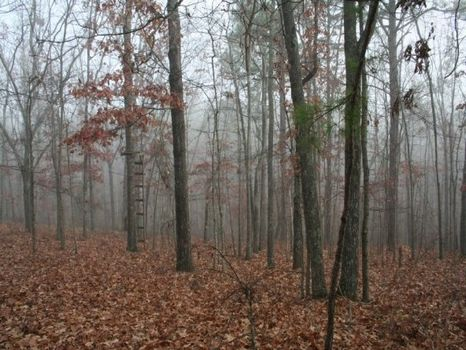 259ac Tract with Mtn Views Reduced : Thomaston : Upson County : Georgia