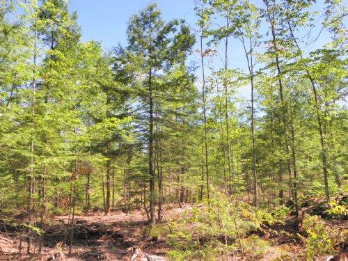 Hemlock Hill Forest : Charlestown : Sullivan County : New Hampshire