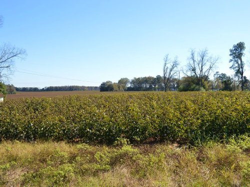 Good Farm Acreage : Headland : Houston County : Alabama